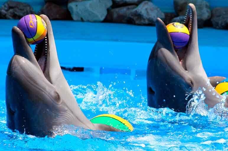 Дельфинарий NEMO в Одессе