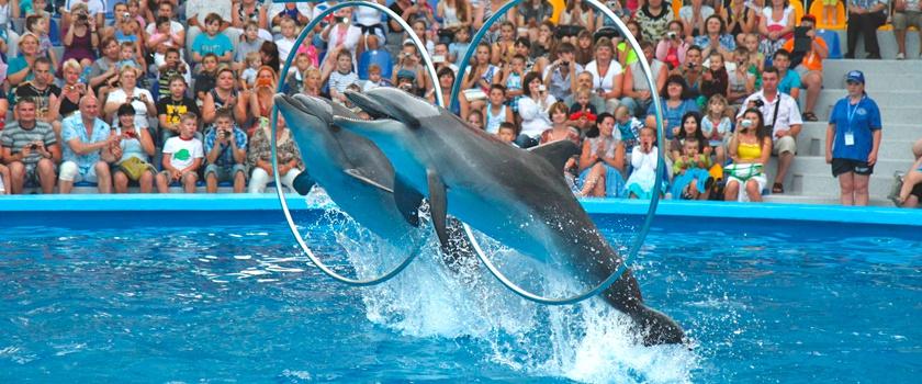 фото Дельфинарий «Немо» в Одессе